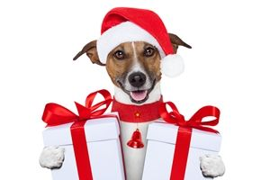 santa christmas dog with two big gifts